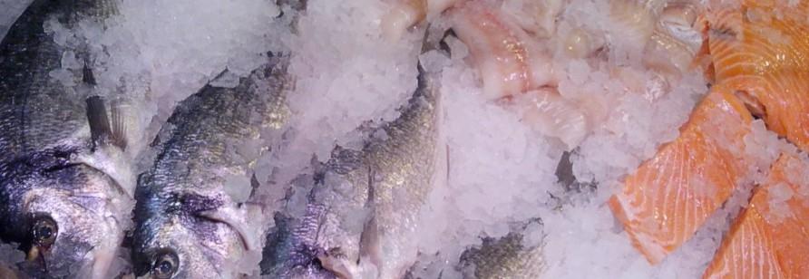 Fisch und Meeresfrüchte ...